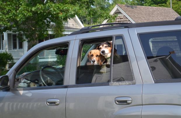 Castine, Maine dogs